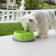 dog-small-oh-bowl